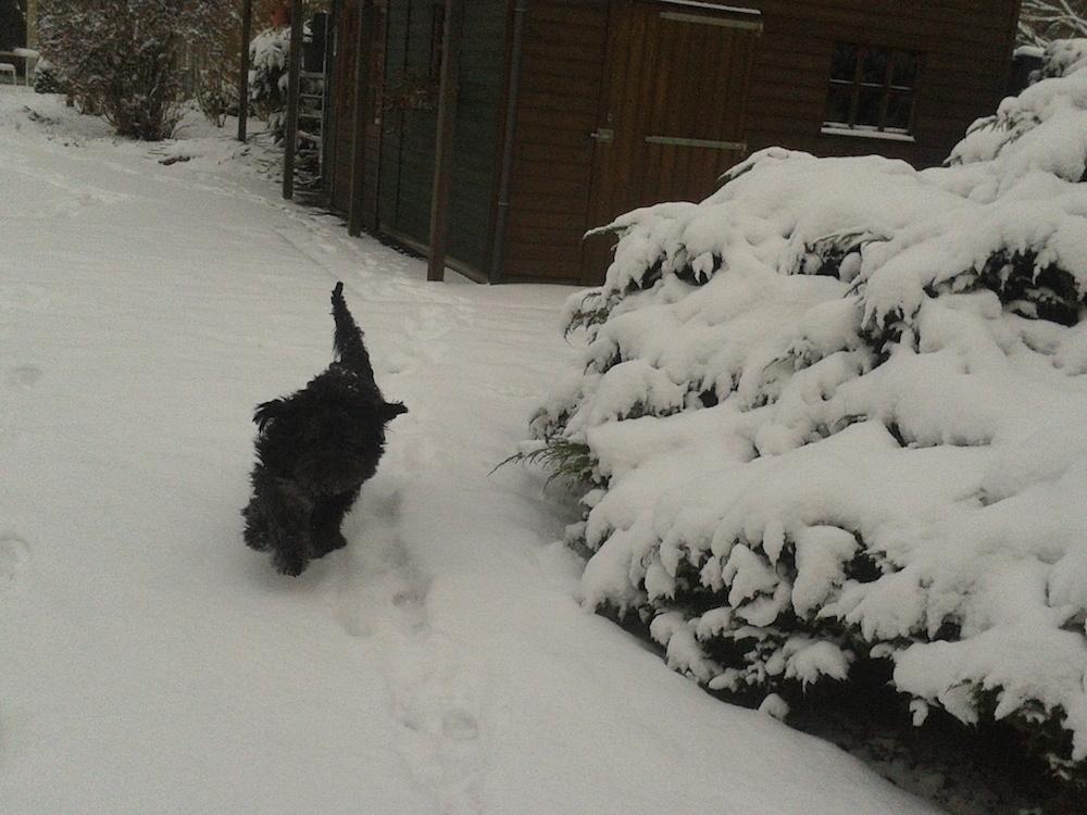 Fotomoment nr 3, Sneeuw!!